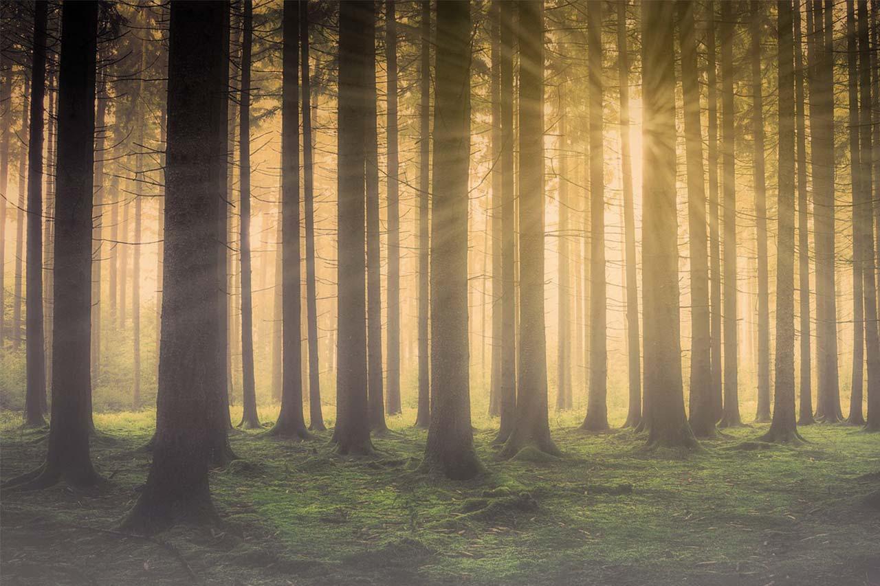 BusinessClinic Advies Het bos door de bomen zien