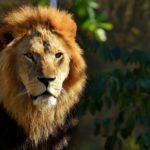 Businessclinic Authentiek-leiderschap
