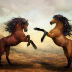 Businessclinic Conflicten